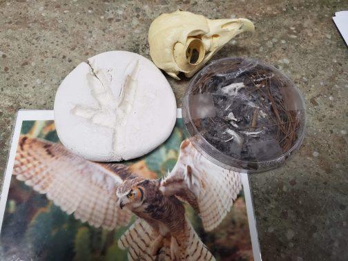 owl pellet study (2)