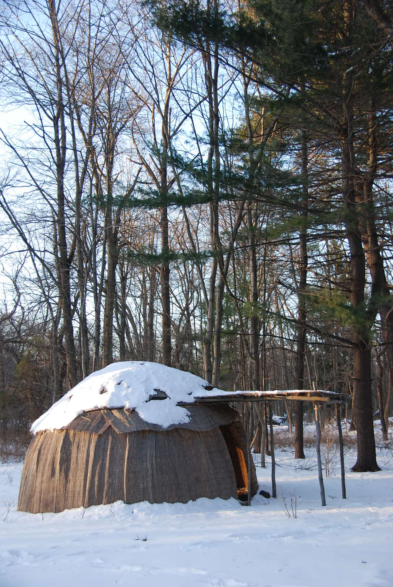 Construction Of An Eastern Woodland Indian Wigwam Nature