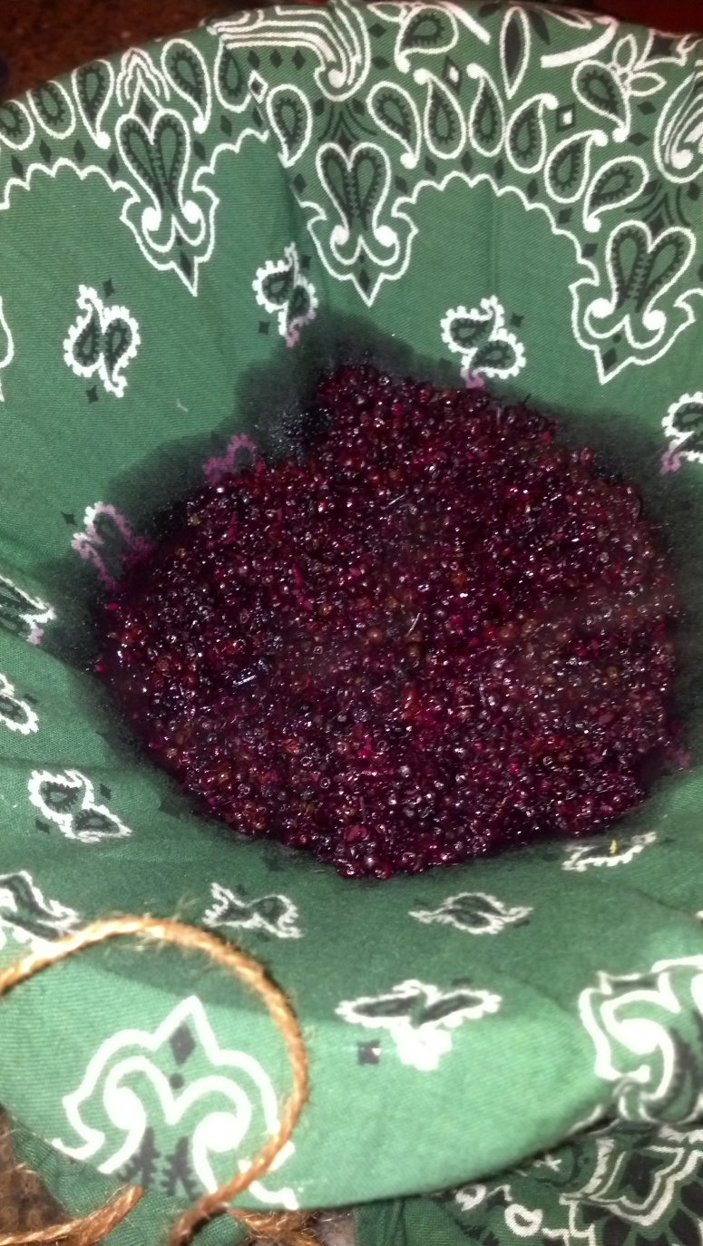 Harvesting Common Elderberry to Make Jam »Elderberry juice straining ...