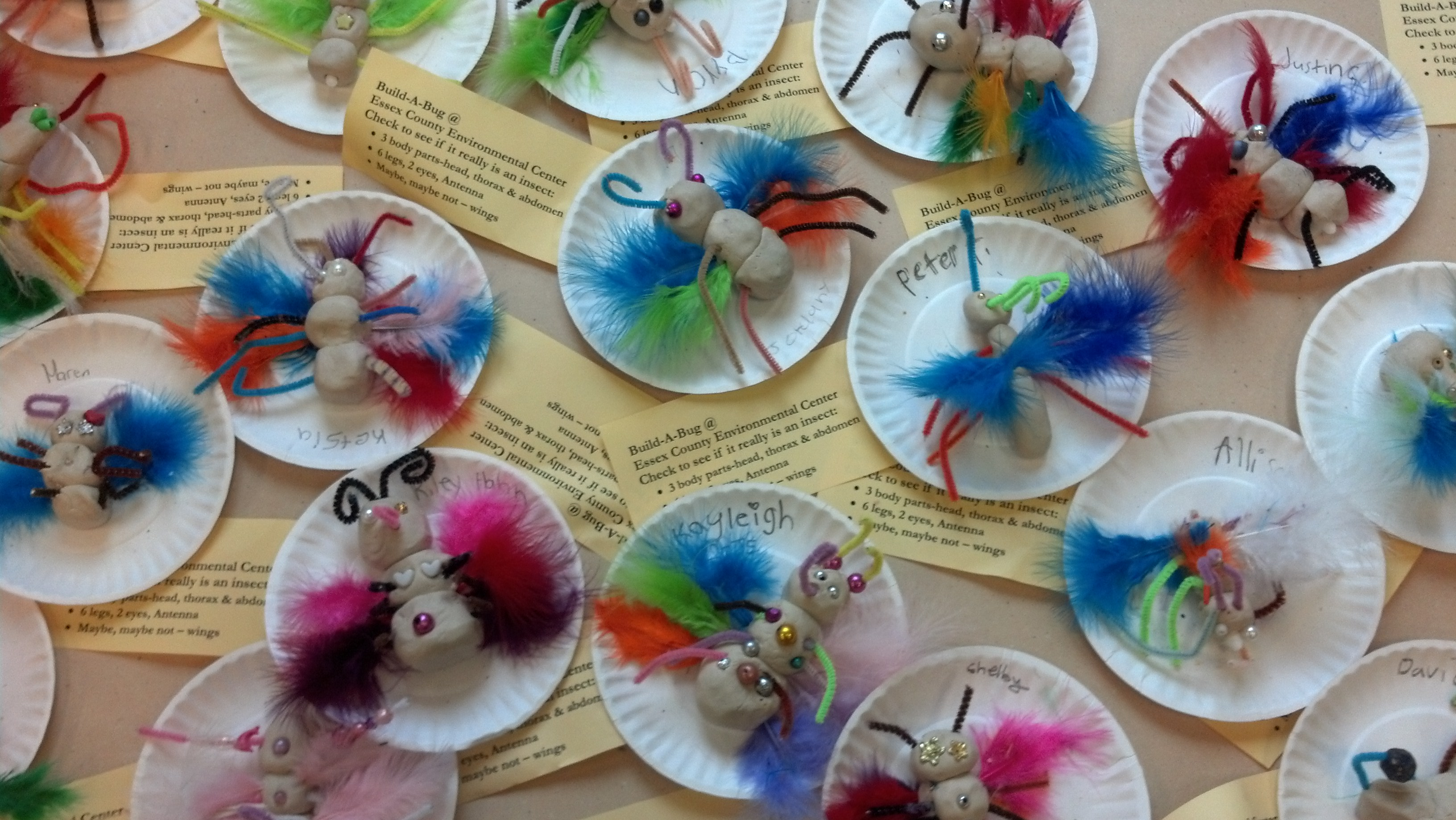 Buzz Into Action with the Build-A-Bug Activity – Nature Into