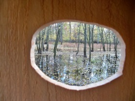 View From inside of Wood Duck Nest Box