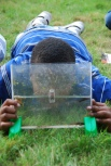 Frog Pond Science, Hop Into Action - Examining Tadpoles