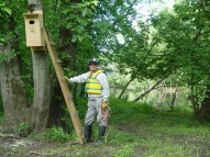 Putting up a Woodduck Box along the Passaic River