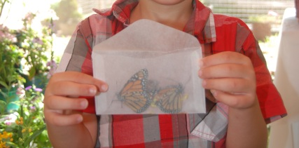 Butterflies Delivered in Glassine Envelopes from Rainbows End Butterfly Farm