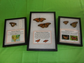 Monarch Educational Riker Mounts - Buzz Into Action