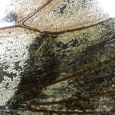 Painted Lady Butterfly Wing