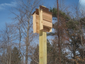 Batboxes at Hilltop Reservation