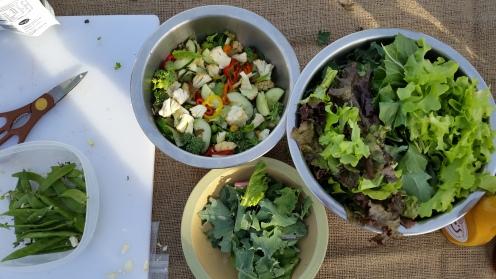 Lettuce Celebrate Program Gathering