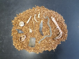 Mystery Biofacts as part of my Wild About Wildlife program