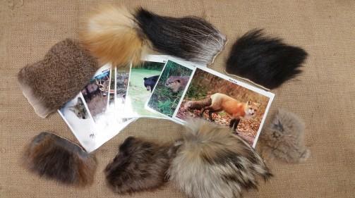 Match the Fur