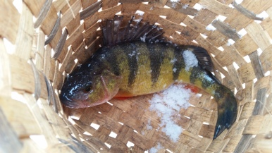 Fat Perch at Splitrock Reservoir