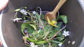 Spring Wild Edible Salad with Trout Lily, Spring Beauty, Wild Violet, Garlic Mustard, Onion Grass, Lambs Quarters and Redbud blossoms.
