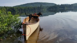 Oly on Mad River Explorer Canoe, Lake Lilla