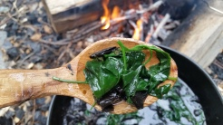 Black Trumpet Mushrooms with Lambs Quarters fried in Coconut Oil on Camofire