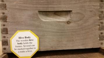 Hive Body