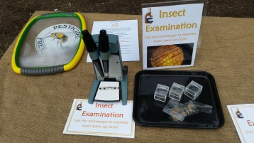 Insect and Bee Examination