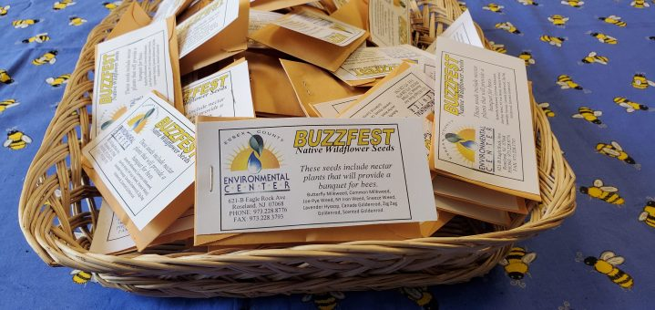 Buzzfest, Native Wildflower Seeds, Nature Into Action