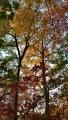 Autumn Colors (1)