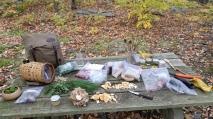 Autumn Foraged Ingredients