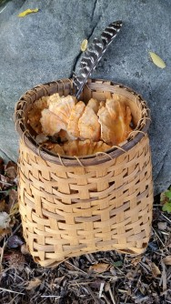 Chicken of the Woods in Split Rattan Basket