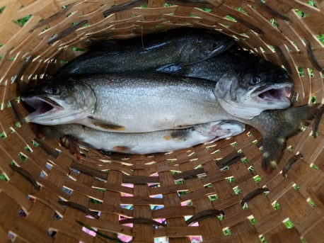 Lake Trout at Round Valley Reservoir (2)