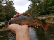 Brookie that leaped for my spinner