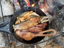 Brook Trout Cooking in Cold Steel Pan