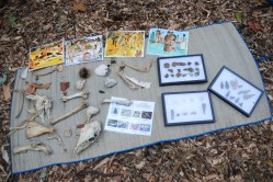 Display of findings
