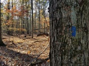 Follow the Blue Blazed trail.