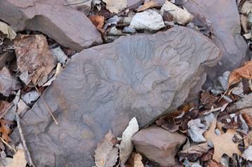 Finding Tracks at Riker Hill Walter Kiddie Dinosaur Quarry, DO NOT REMOVE (1)