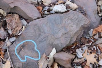 Finding Tracks at Riker Hill Walter Kiddie Dinosaur Quarry, DO NOT REMOVE (2)